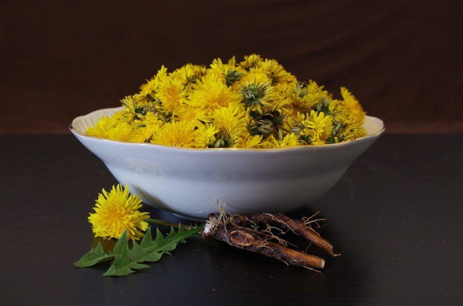 Maslačak korijen i list kao lijek