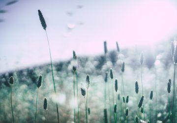 alergije prirodno liječenje - najbolji prirodni lijekovi za alergije