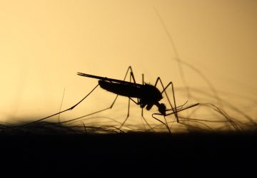 kako napraviti prirodni repelent - sprej protiv komaraca na bazi eteričnih ulja